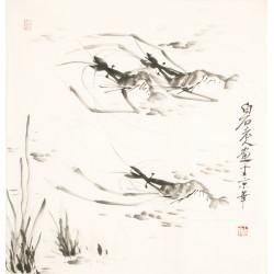 Shrimp - CNAG006215