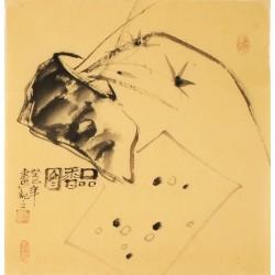 Orchid - CNAG006227