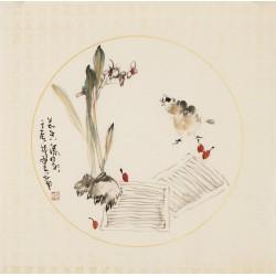 Narcissus - CNAG006281