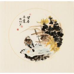 Chrysanthemum - CNAG006290