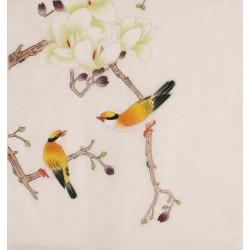 Orchid - CNAG006340