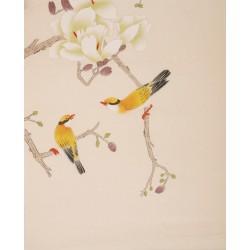 Orchid - CNAG006358