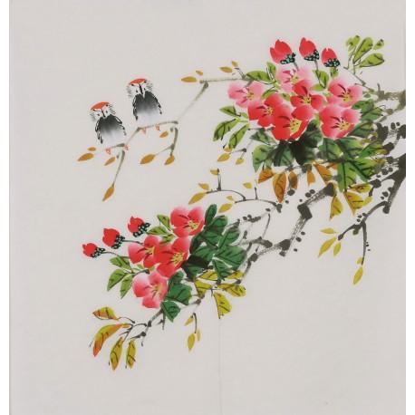 Hibiscus - CNAG006424