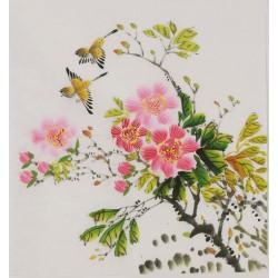Hibiscus - CNAG006434