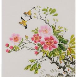 Hibiscus - CNAG006441