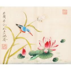 Kingfisher - CNAG006504
