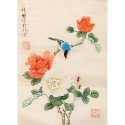 Hibiscus - CNAG006513