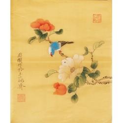 Hibiscus - CNAG006515