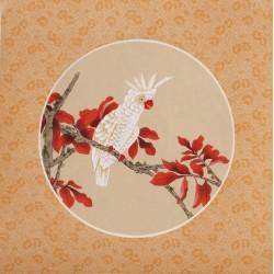 Parrot - CNAG006528