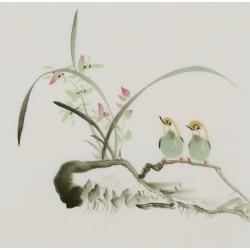 Orchid - CNAG006543