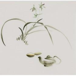 Orchid - CNAG006577