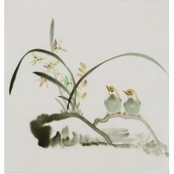 Orchid - CNAG006601