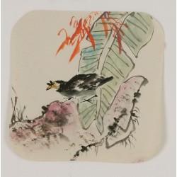 Starling - CNAG006612