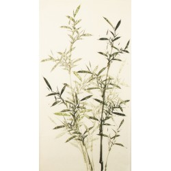 Green Bamboo - CNAG000662