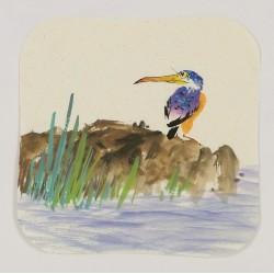 Kingfisher - CNAG006623