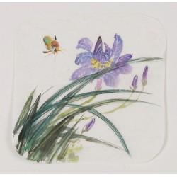 Orchid - CNAG006627