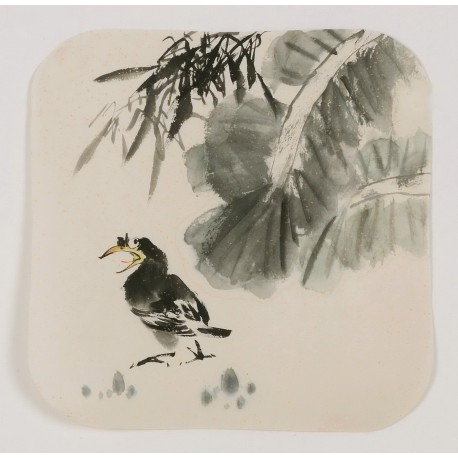 Starling - CNAG006634