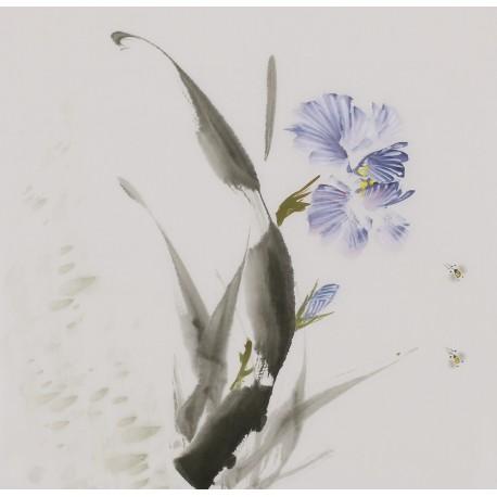 Morning Glory - CNAG006664