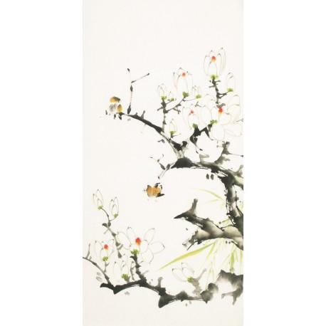 Orchid - CNAG000667