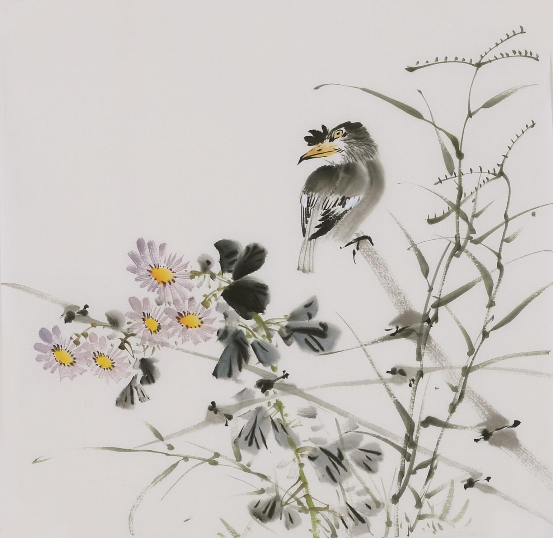 Starling - CNAG006686