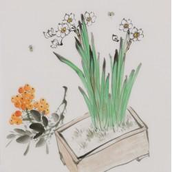 Narcissus - CNAG006689