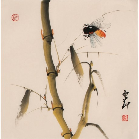 Bamboo - CNAG006831