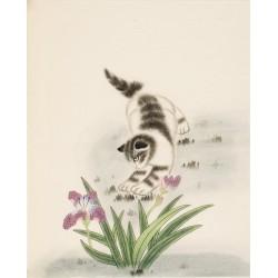 Cats - CNAG000761