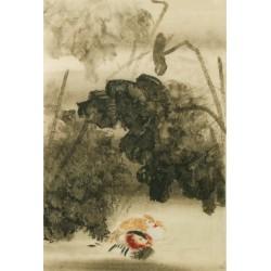 Mandarin Duck - CNAG000765