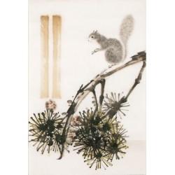 Squirrels - CNAG000767