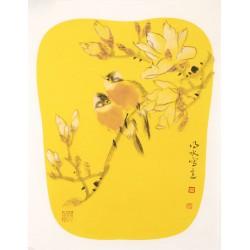 Orchid - CNAG000781