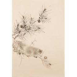 Squirrels - CNAG000812