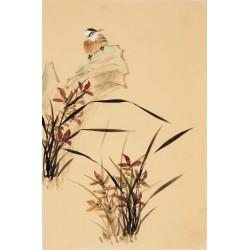 Orchid - CNAG000821