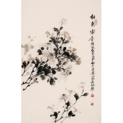 Chrysanthemum - CNAG000823