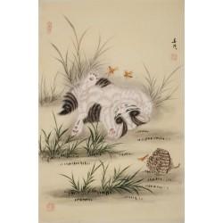 Cats - CNAG000844