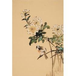 Chrysanthemum - CNAG000863
