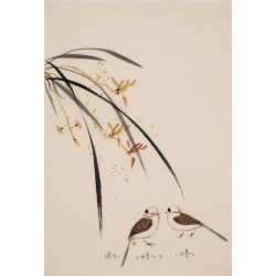Orchid - CNAG000870