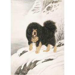 Dog - CNAG000088