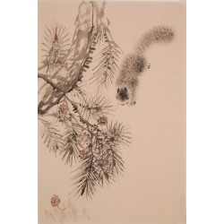Squirrels - CNAG000885