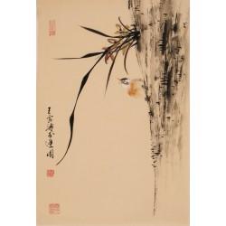 Orchid - CNAG000906