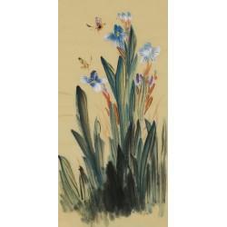 Narcissus - CNAG000971