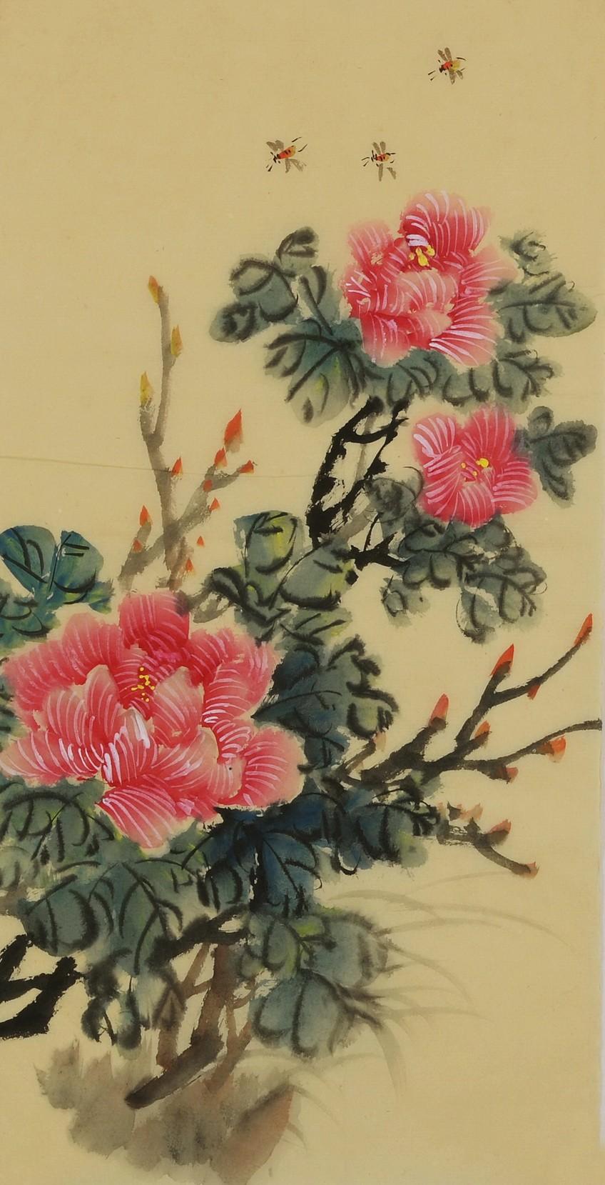 Hibiscus - CNAG000983